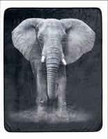 MANTA ELEPHANT
